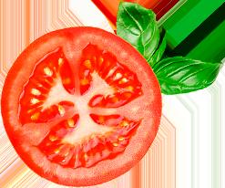 rodaja tomate